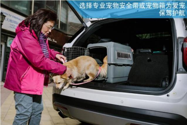 七条安全贴士,送给带宠物乘车的你